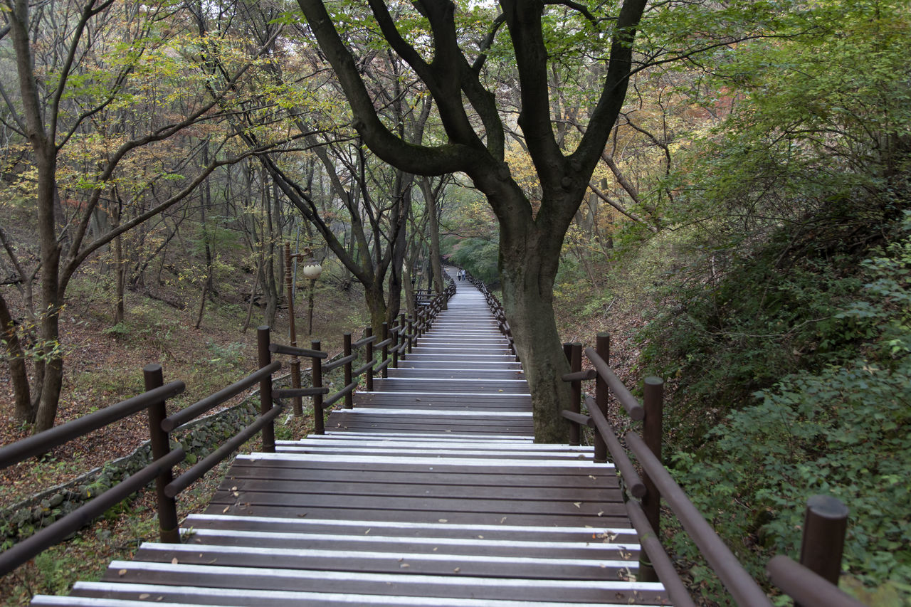 autumn in Maisan Mountain, Muan, Jeonbuk, South Korea Autumn🍁🍁🍁 Beauty In Nature Branch Day Fall Footbridge Forest Forest Photography Growth Maisan Mountain Nature No People Outdoors Railing Stairway The Way Forward Tranquil Scene Tranquility Tranquility Tree