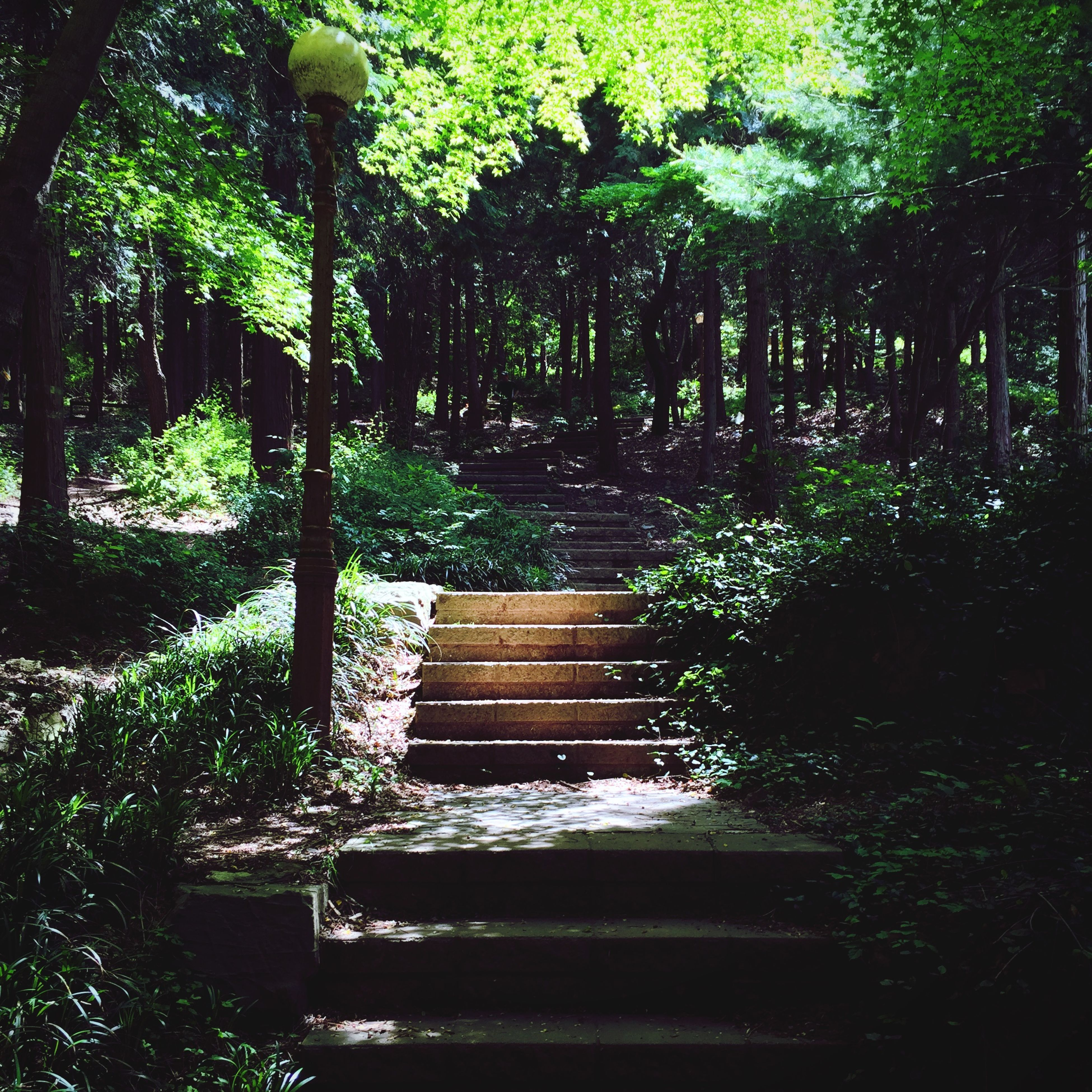 tree, growth, tranquility, bench, green color, park - man made space, plant, nature, forest, the way forward, tranquil scene, empty, steps, beauty in nature, park bench, lush foliage, absence, wood - material, sunlight, park