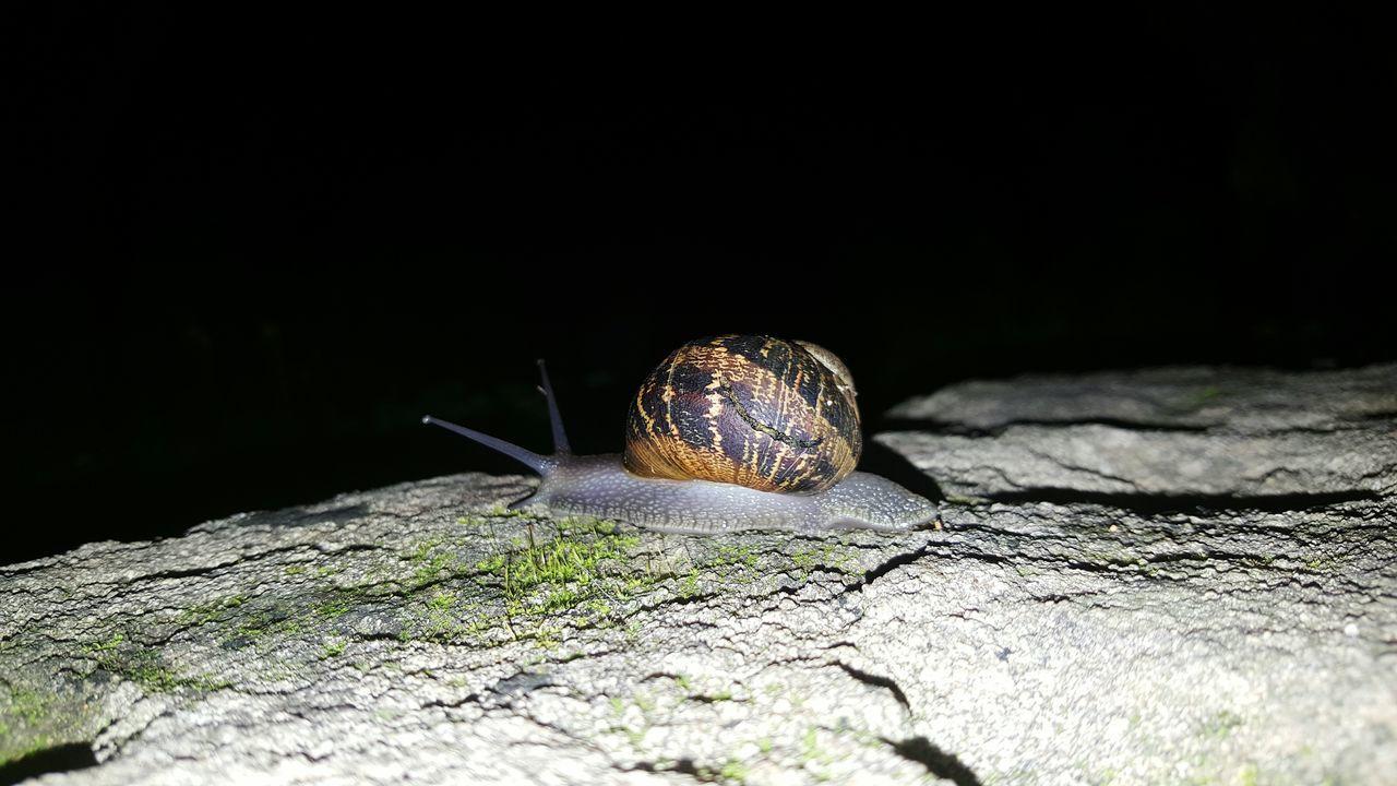 Snail Slow Life 😊 Darknight