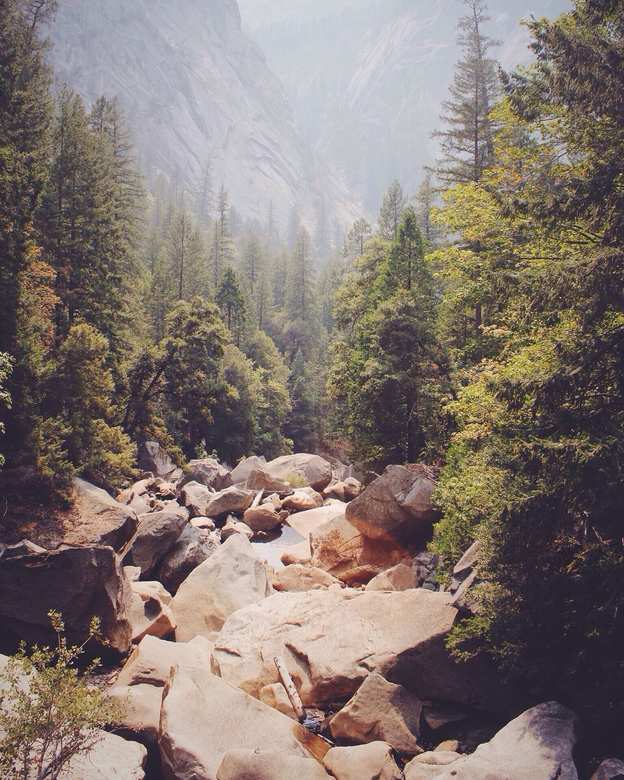 Yosemite, literally the best place on earth Outdoors Tree Forest Tranquil Scene Scenics Tranquility Rock - Object Beauty In Nature WoodLand Nature Non-urban Scene Water Tourism Growth Stream Day Mountain Flowing Green Color Vacations Yosemite National Park Outdoors Photograpghy  Adventure