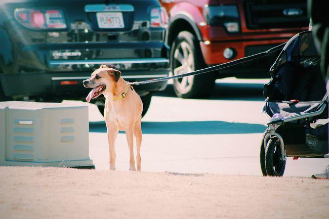 Casual Clothing Day Dog Walk Dog Walker Dog Walking Leisure Activity Lifestyles Mode Of Transport Outdoors Portrait