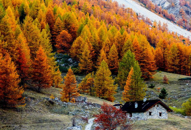 Colorful trees frame the mountain hut Alpine Alps Autumn Autumn Colors Beauty In Nature Chalet Cherry Tree Fall Beauty Fall Colors Forest Hiking Trail Hut Italy Landscape Landscape_photography Larch Larch Tree Mountain Mountains Nature Path Piedmont Relaxing Tree_collection  Woods