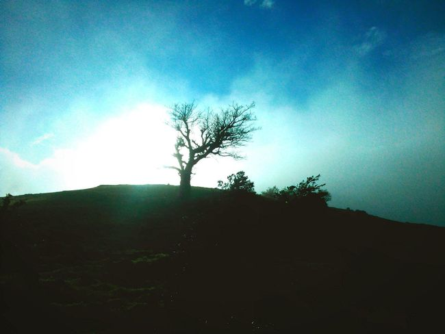 Sunlight Landscape Beauty In Nature Cloud Nature Branch Sky