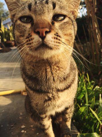 Thecat cat