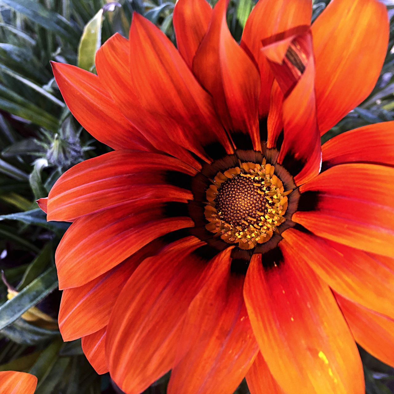 Flower Fragility Petal Beauty In Nature Flower Head Nature Freshness Blooming Growth Orange Color Close-up Pollen Plant Day Outdoors No People Plant