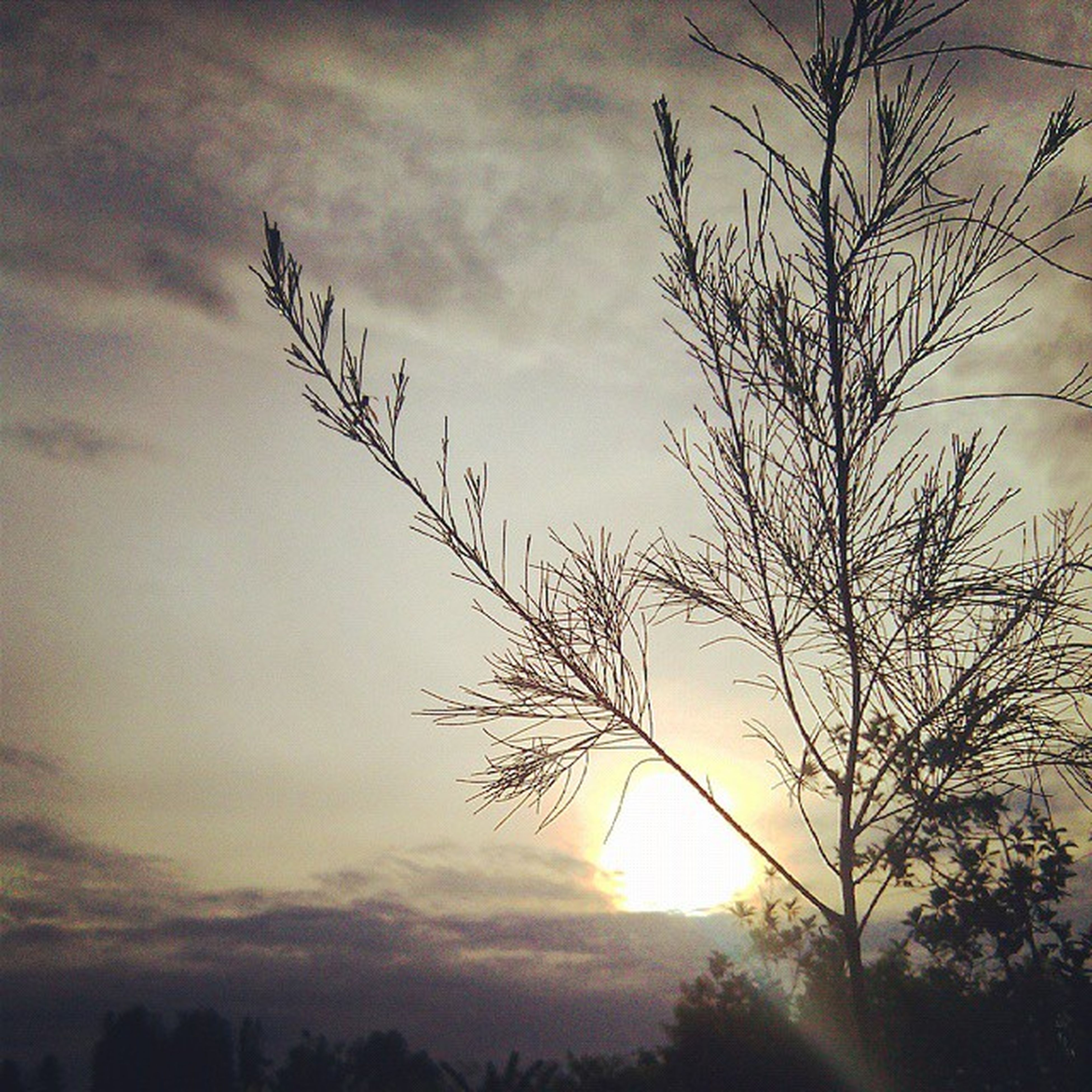 sunset, silhouette, sky, tranquility, bare tree, tranquil scene, sun, scenics, beauty in nature, nature, cloud - sky, tree, branch, landscape, idyllic, cloud, growth, sunlight, field, outdoors