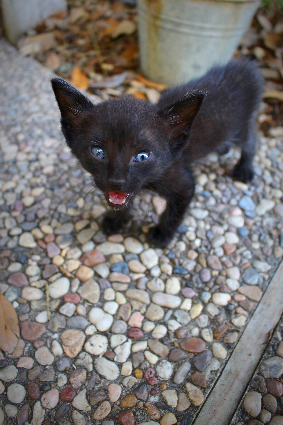 Beautiful stock photos of baby katzen, Aggression, Angry, Animal Themes, Black Color