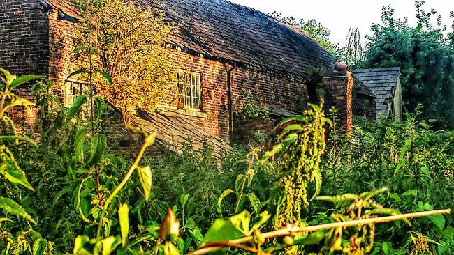 Old Buildings Abandoned Buildings Overgrown Sunshine Summertime Nettles @ Aston
