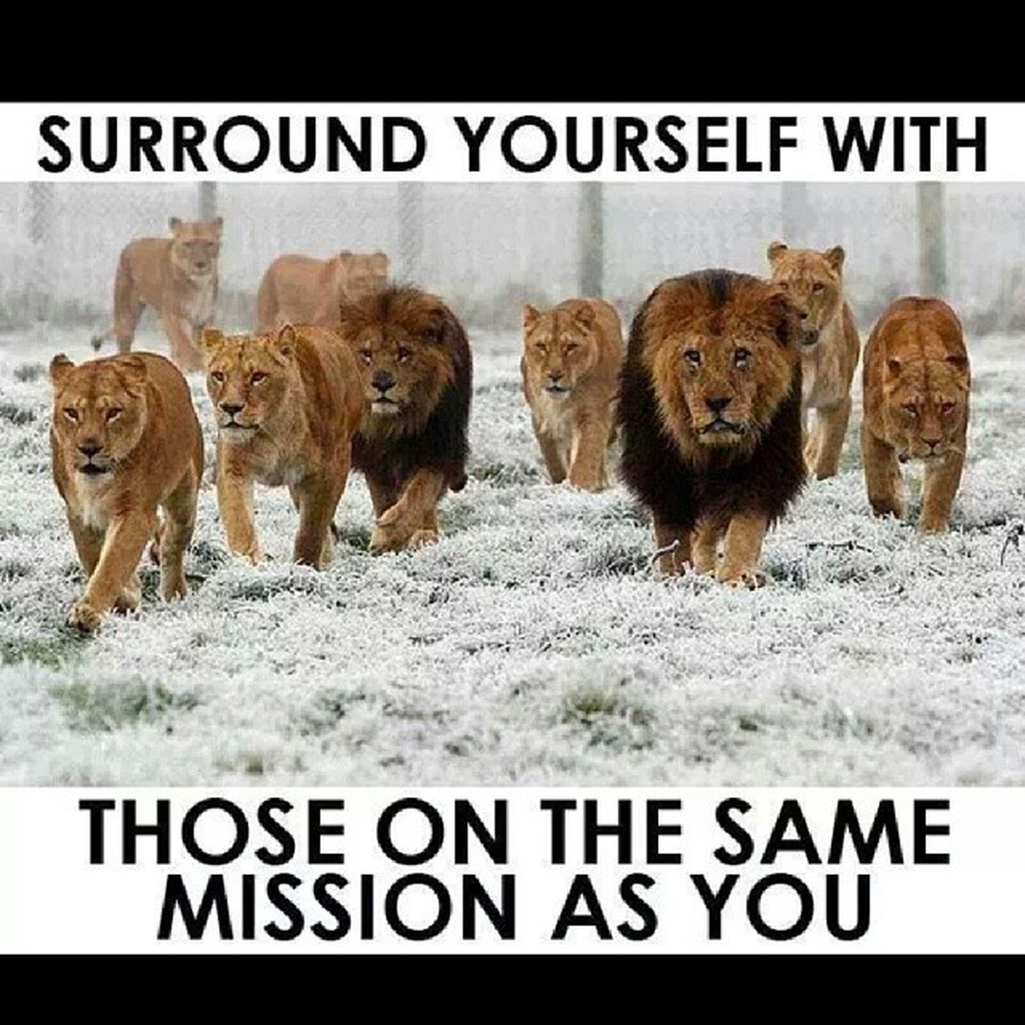 ShitThatIsAMust LionsTigersAndBears R Always Welcomed... SquadUp  InstaQuotes