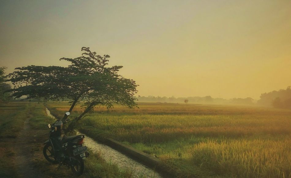 Sunset Nature Tree Growth Beauty In Nature Agriculture Landscape No People Outdoors Sky Day
