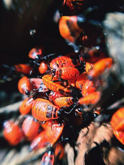 Bugs Animals In The Wild Animal Themes Large Group Of Animals Wildlife Nature Animal Wildlife Insect No People Close-up Day Outdoors Beauty In Nature makro