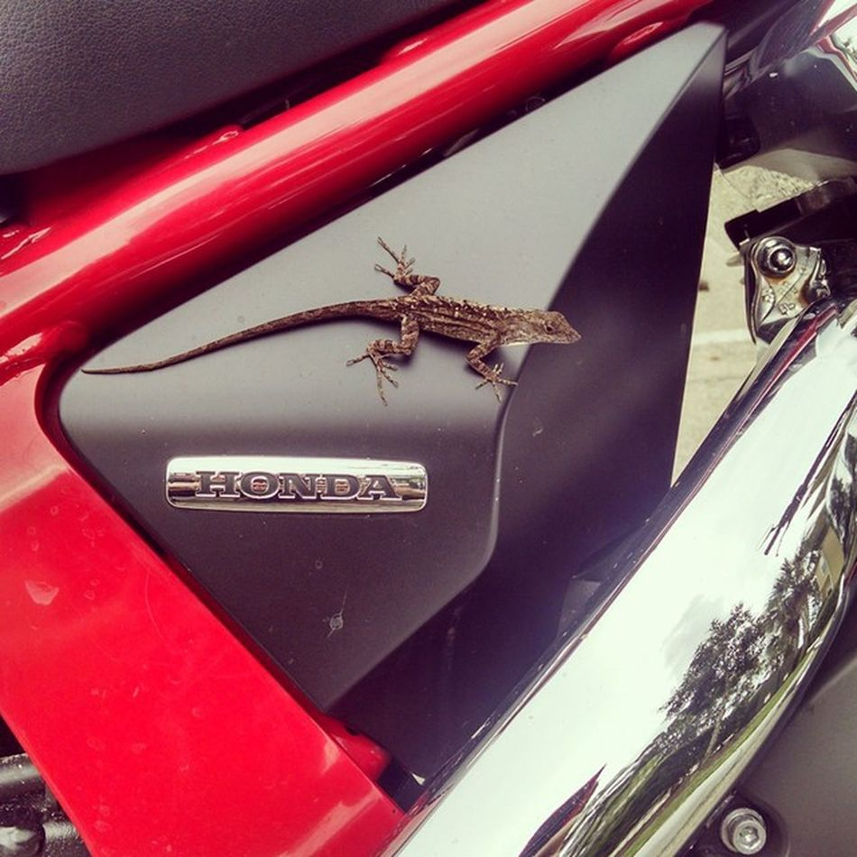 Homes wants to go for a ride. Honda Lizard SaturdayRide