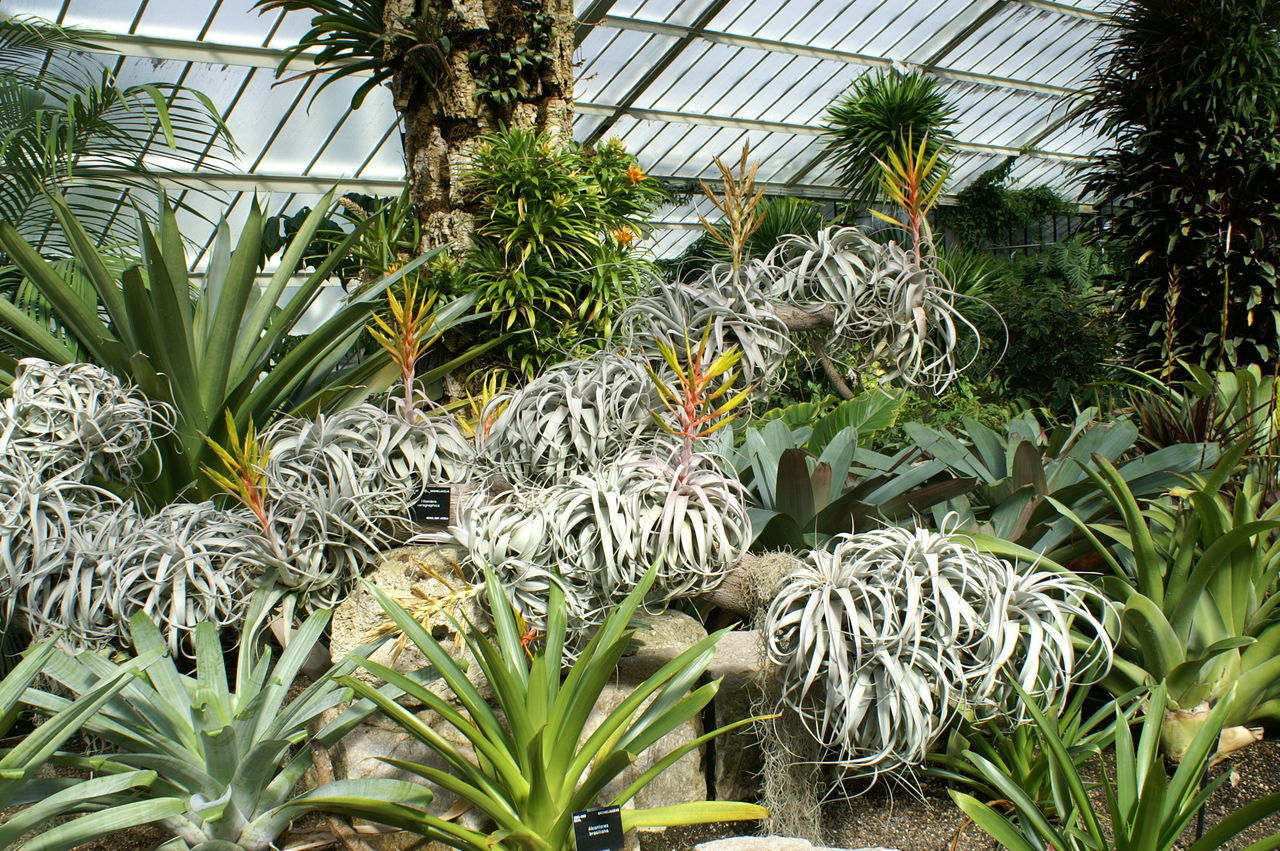 Kew Garden in London Day Fat Plants Flower Collection Flowers, Nature And Beauty Flowers,Plants & Garden Kew Gardens, London London Nature No People Outdoors