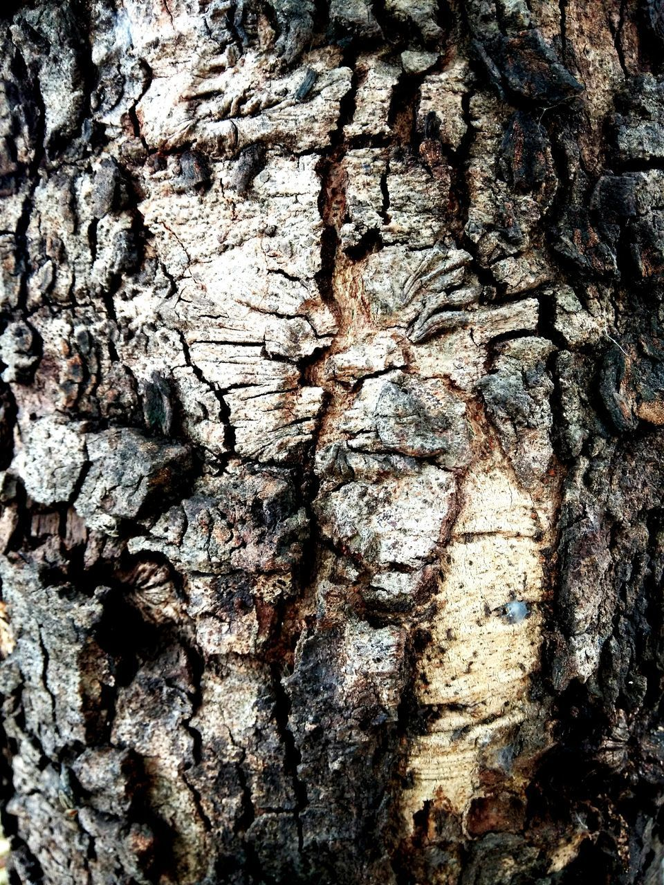 tree trunk, textured, tree, bark, rough, wood - material, close-up, backgrounds, full frame, cracked, no people, day, pattern, nature, tree stump, outdoors, knotted wood, tree ring