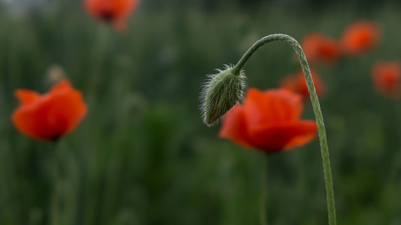 The Great Outdoors Nature The Great Outdoors - 2016 EyeEm Awards The Great Beauty Poppy Flowers Poppyflower Poppy In A Field Poppy Love Papaver Spring 2016 Springflowers The Beginning Of Summer The Street Photographer - 2017 EyeEm Awards The Great Outdoors - 2017 EyeEm Awards Neon Life EyeEm Selects Breathing Space Investing In Quality Of Life The Week On EyeEm EyeEmNewHere Your Ticket To Europe Mix Yourself A Good Time Discover Berlin Been There. Done That. Lost In The Landscape Second Acts Be. Ready. EyeEm Ready   AI Now