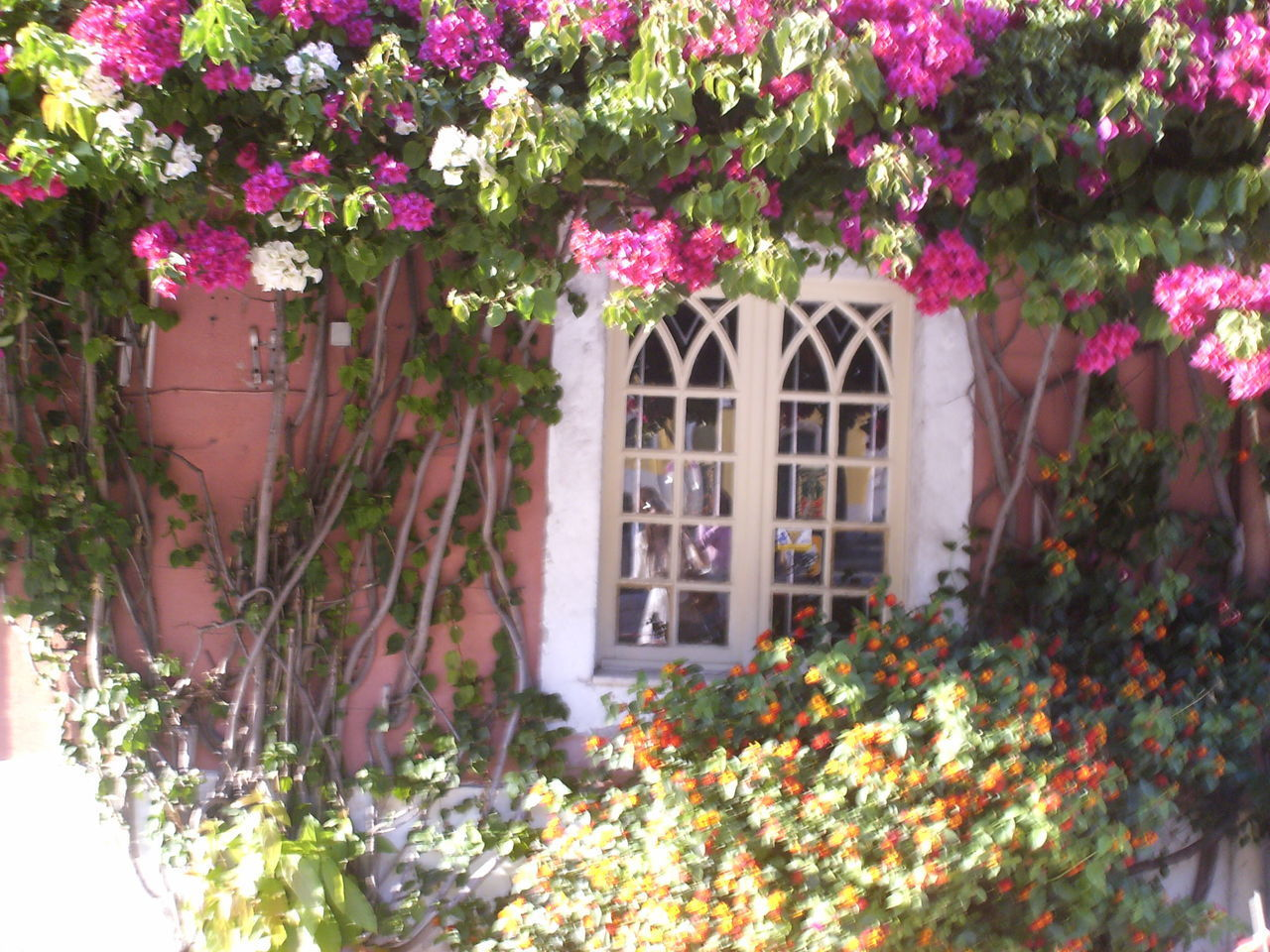 Architecture Beauty In Nature Building Exterior Built Structure Day Flower Flower Head Flowers Arround The Window Flowers In Lisbon Fragility Freshness Growth House Leaf Nature No People Outdoors Pink Color Plant Romantic Flowers Romantic Pictures Romantic Window Various Colors Of Flowers Window Window Box