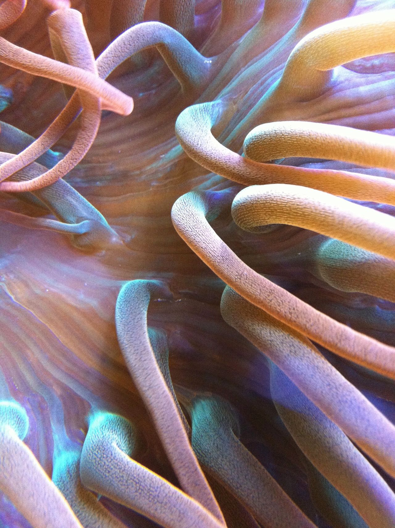 Beautiful stock photos of underwater, Backgrounds, Close-Up, Coral, Ecosystem