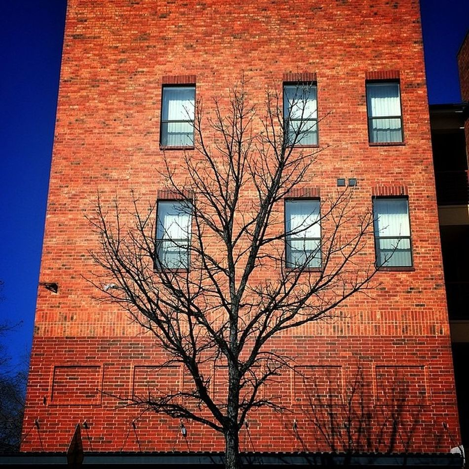 Tree & Bricks Trees Plano DFW