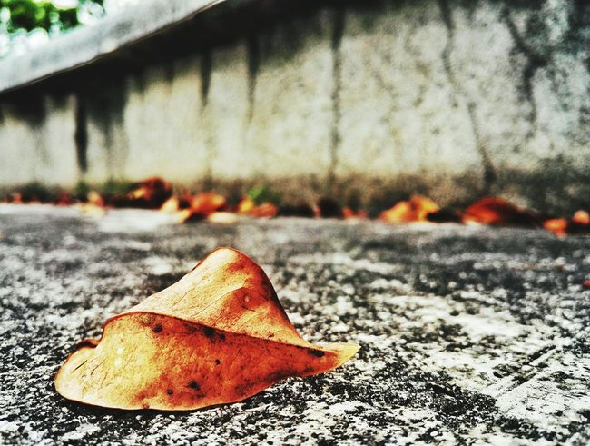 Leaf Autumn Dry Change Season  Street Fallen Close-up Natural Condition Focus On Foreground Day Fallen Leaf Leaf Vein Fragility Surface Level Outdoors Leaves