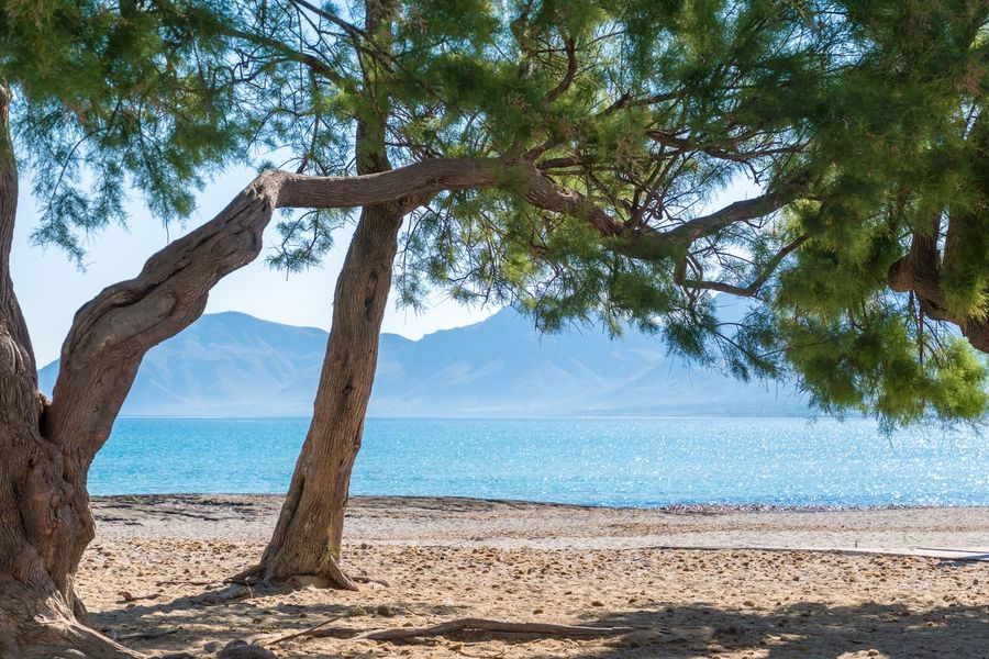 Krull&Krull Images Mallorca Beauty In Nature Blue Branch Day Dead Tree Growth Mallorca Mountain Nature No People Non-urban Scene Outdoors Scenics Sea Sky Son Serra De Marina The Great Outdoors - 2017 EyeEm Awards Tranquil Scene Tranquility Tree Tree Trunk Water An Eye For Travel