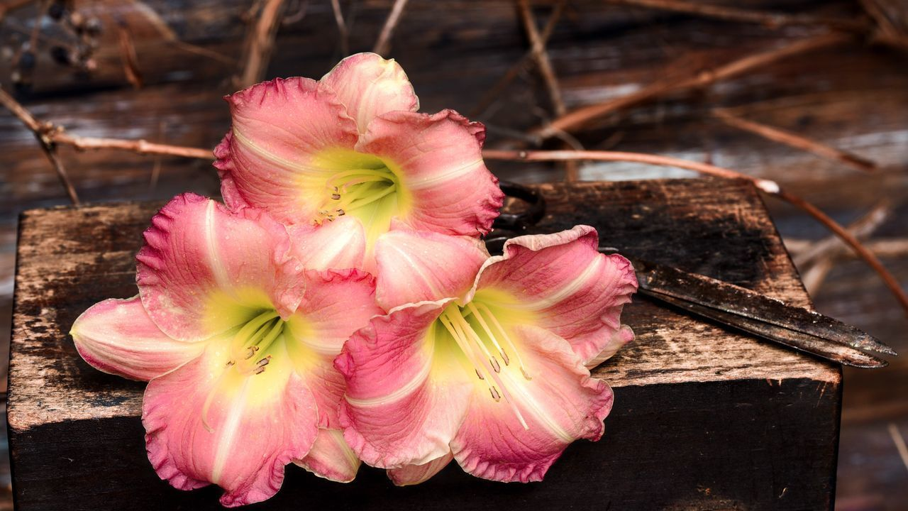 Check This Out Taking Photos Enjoying Life Flower Porn Western Living Stock Photography Photo Of The Day Stock Photo Popular Photography Stock Image Taking Photos Rustic Charm Rustic Rustic Beauty Rustic Style Nature Lovers Mood Of The Day Flower Collection Lillies