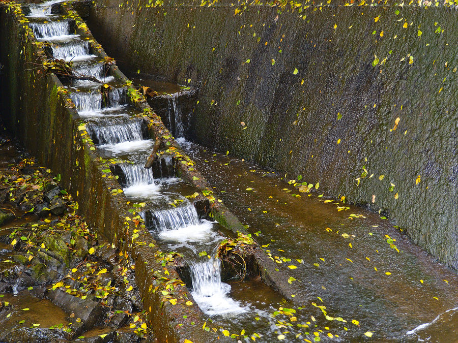 Autumn Close-up Day High Angle View Leaf Nature No People Outdoors Water Waterstairs Wet Yellow