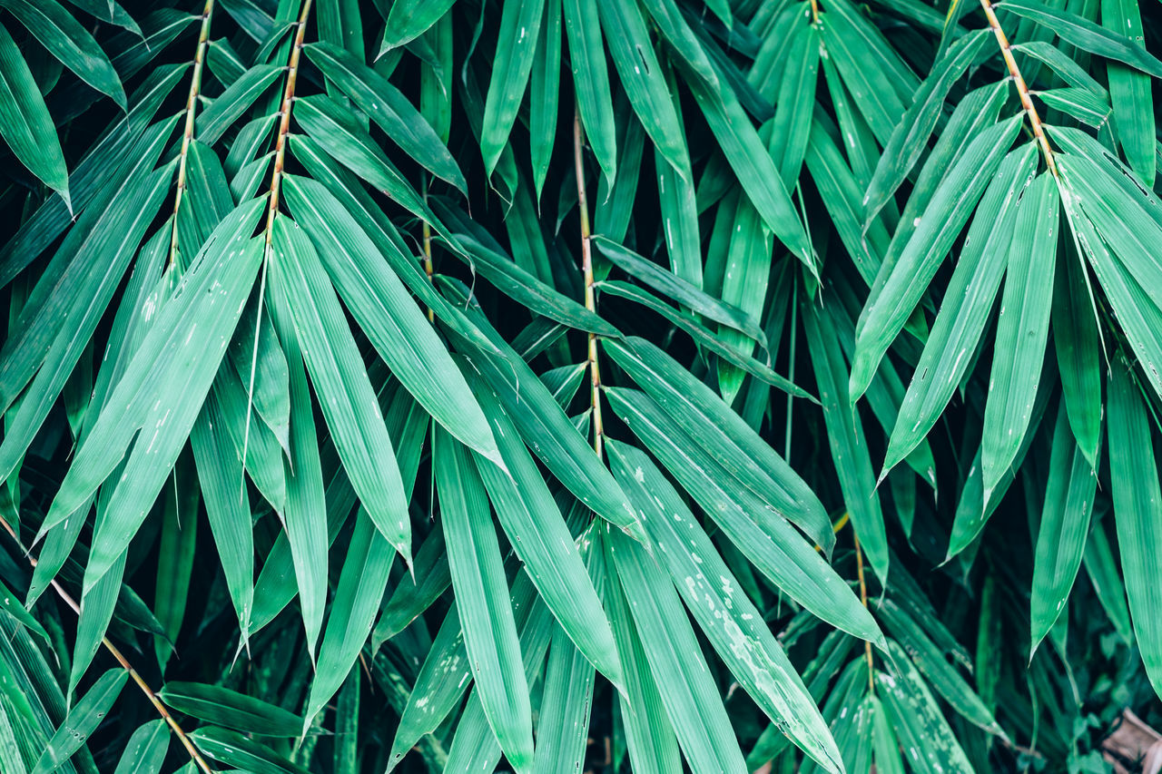Backgrounds Bamboo Beauty In Nature Close-up Cover Day Foliage Full Frame Green Color Grove Growth Leaf Nature Outdoors Pattern Plant Texture Tree
