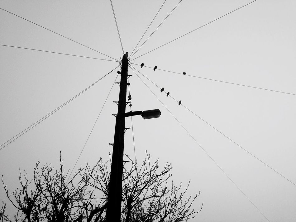 Telephone Pole Birds On A Wire Winter Telephone Wires Birds On Wire Birds In The Wild Silhouette Silouette & Sky Silhoutte Photography Silhouette Birds Outdoor Photography