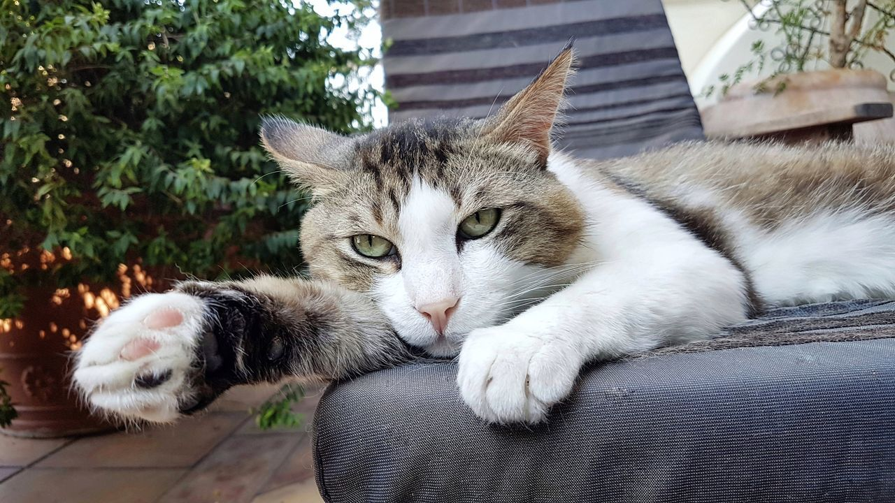 Domestic Cat Pets Animal Themes Domestic Animals Feline Mammal One Animal Day No People Whisker Relaxation Outdoors Portrait Close-up Nature