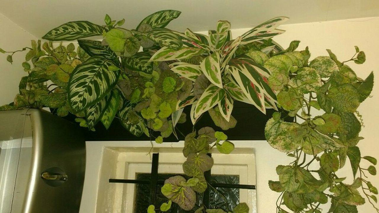 My design of silk plants display Silkscape Silk Plants Taking Photos PhonePhotography Creativity Creation