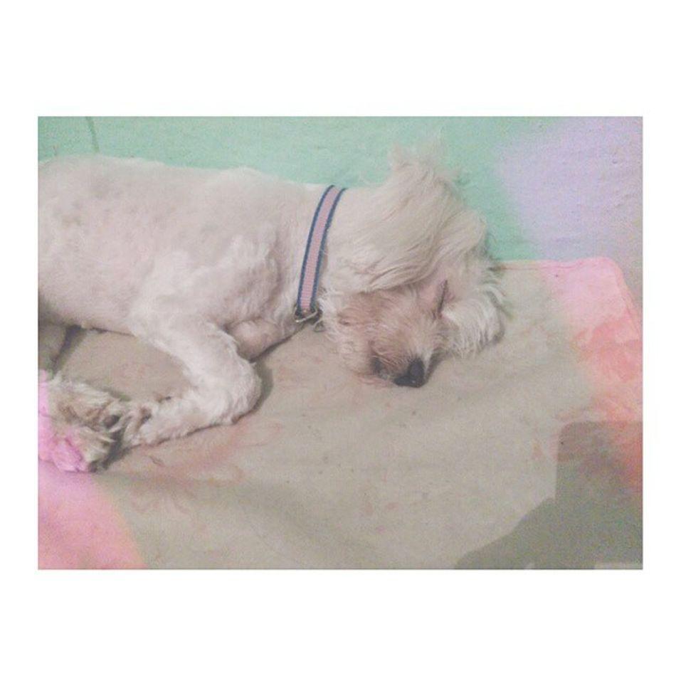 Mi niña preciosa Instasize Instaboli Laamo Duermebonito esmivida chiquitina ???❤❤