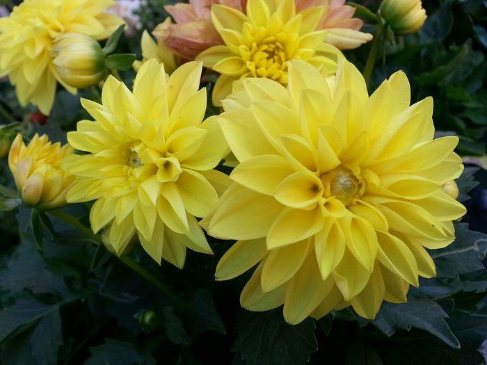 3XSPUnity 3XSPhotographyUnity Freshness Green Color Beauty In Nature Nature Flower Yellow Colors Yıldız çiçeği Star Flower
