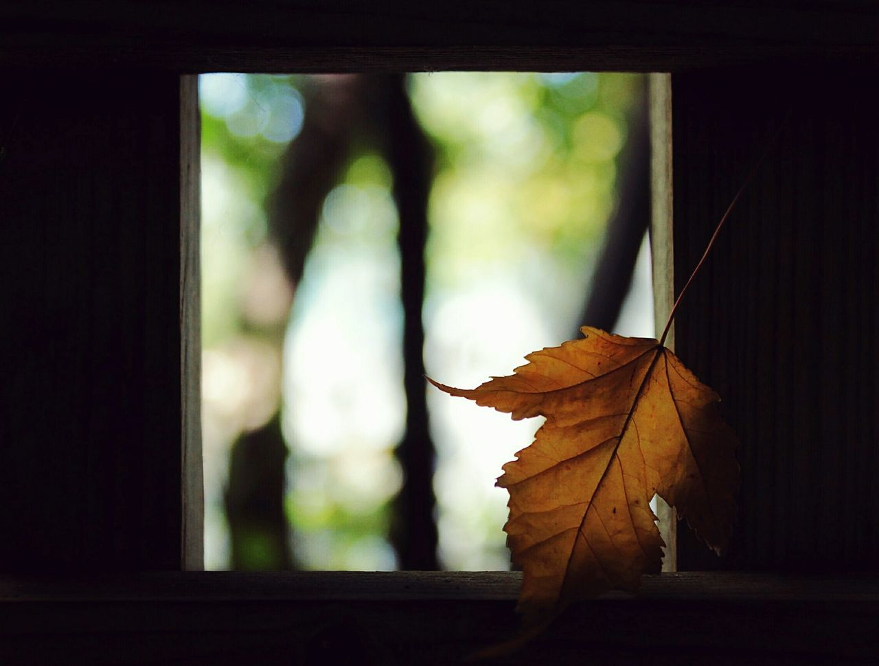 Typical Autumn, looking all beautiful and shit. Nature Leaf Autumn No People Taking Photos EyeEm Getting Inspired EyeEm Best Shots Bokeh Photography October Tranquil Scene Window