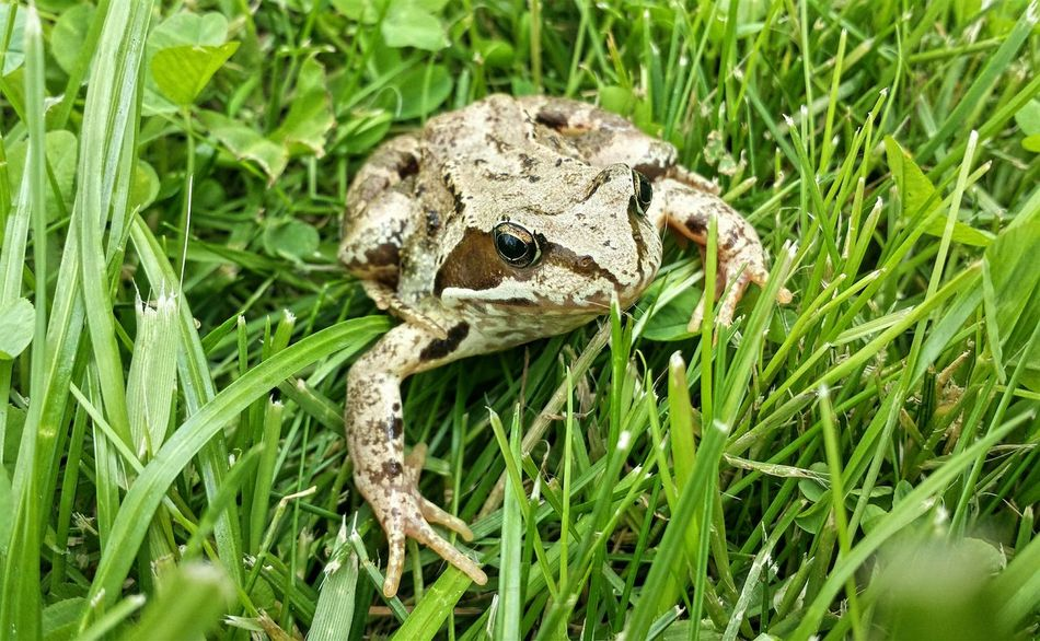 Beautiful stock photos of frog, Animal Themes, Animals In The Wild, Close-Up, Day
