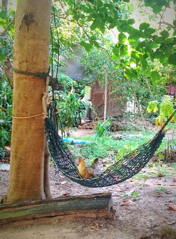 Paesechevaiusanzachetrovi Chilling Swing Altalena Dondolando Siesta SiestaTime Toohottohandle Enjoying Life Thailand #kohphangan