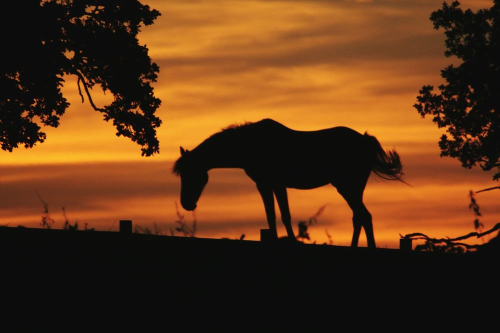 Horses on the hill Horse Silhouette Sunset Silhouettes Sunset_collection Tranquility Screensaver Sunset Beauty In Nature Horses