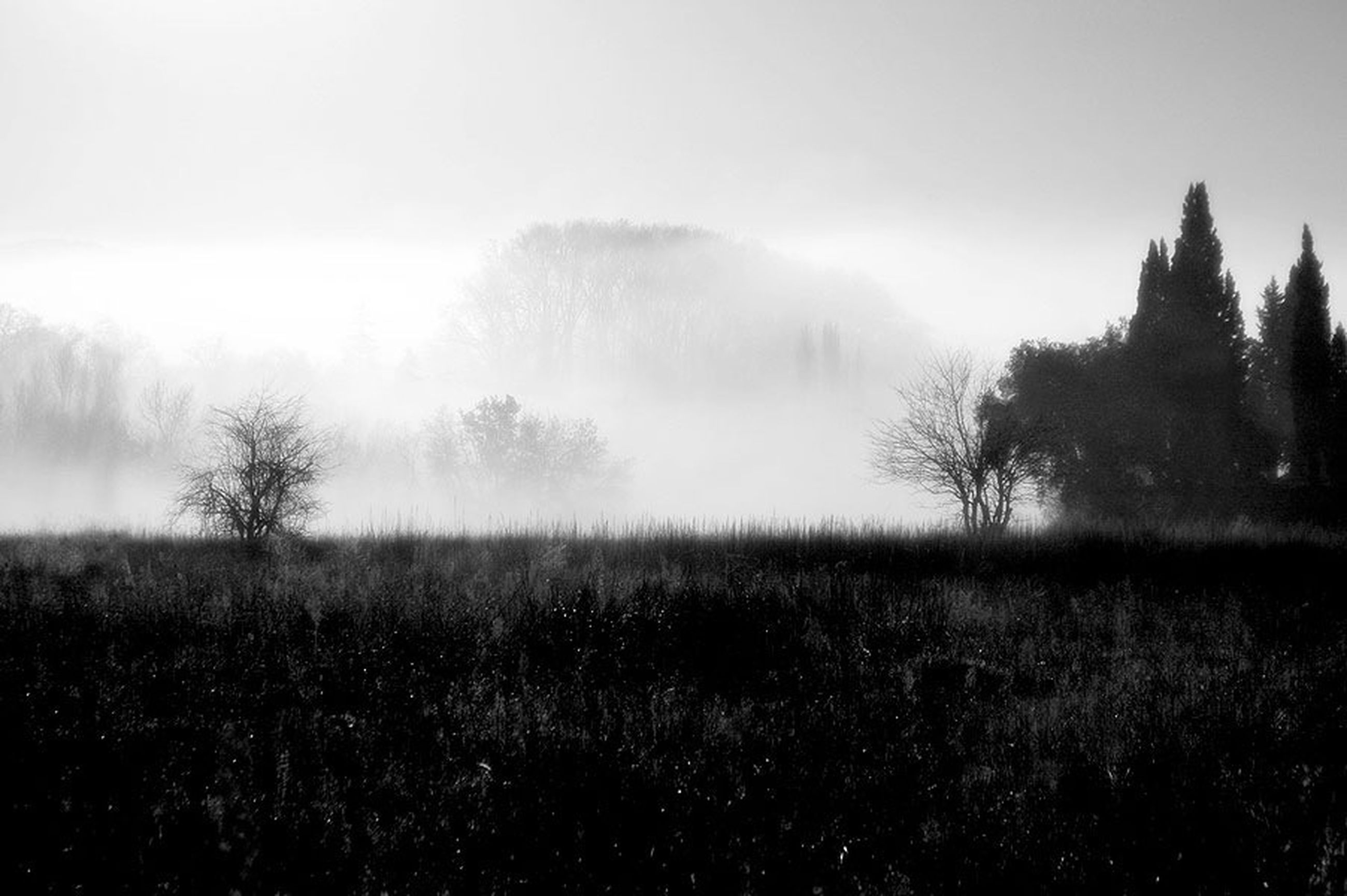 fog, foggy, tree, tranquil scene, tranquility, landscape, scenics, field, beauty in nature, nature, weather, sky, mist, grass, non-urban scene, growth, copy space, bare tree, silhouette