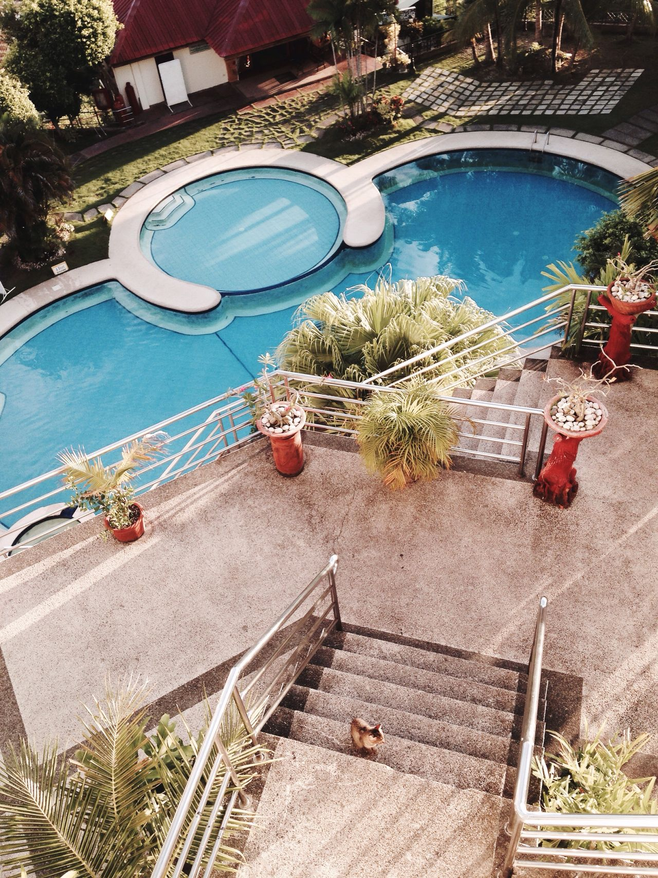 A Bird's Eye View Cebu Bohol Philippines Pool Resort Trees Palm Tropical Stairs Cat Stairs_collection Stairsporn Stairs & Shadows