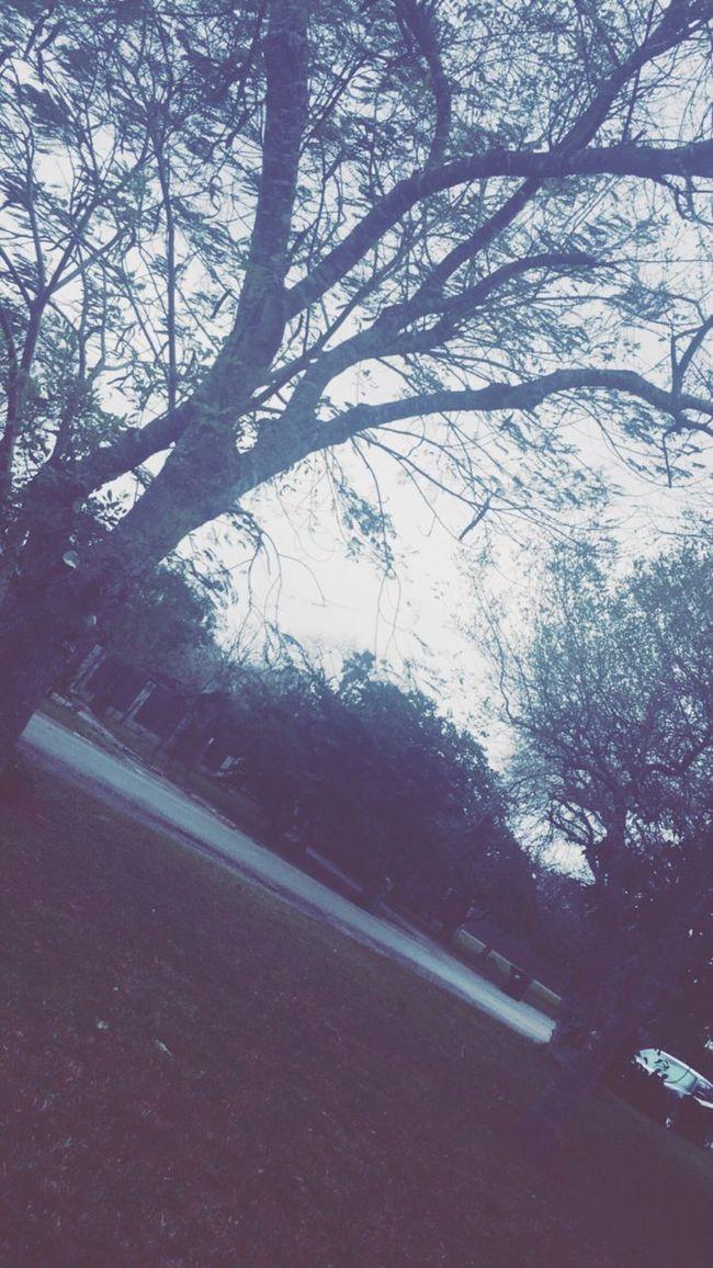 Winter in Los Fresnos Texas
