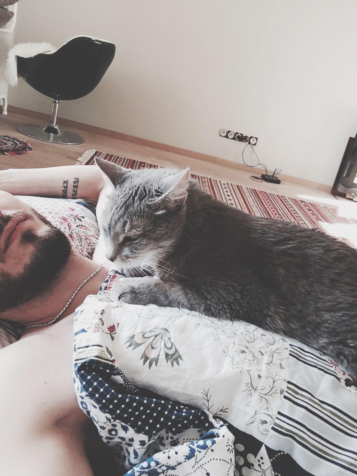 Cat Peresvet1919