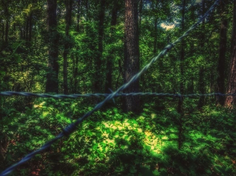 Ifyougointothewoodstoday.. Barbed Wire Wednesday EyeEm Nature Lover
