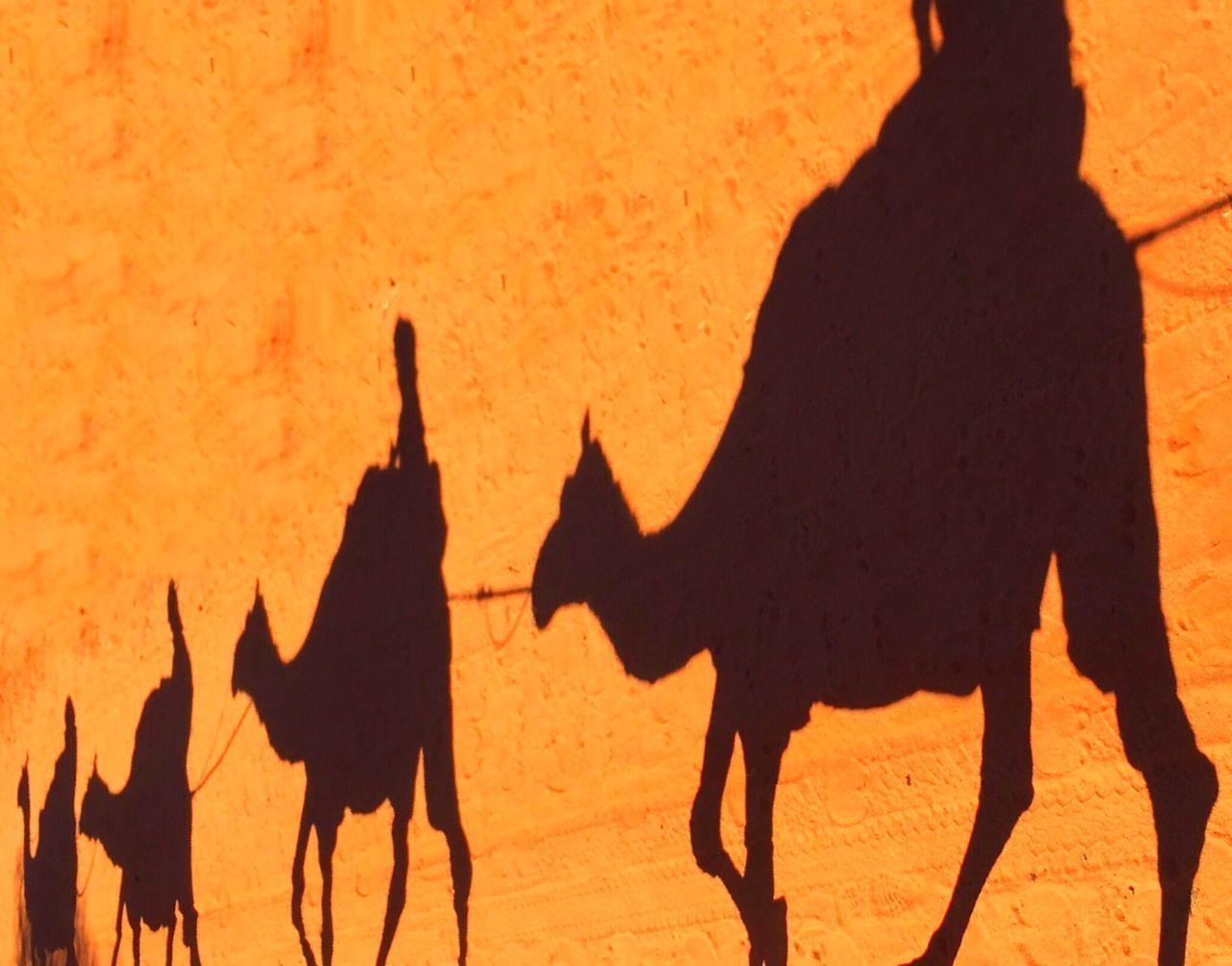 Beautiful stock photos of camel, Alice Springs, Animal Representation, Animal Riding, Animal Themes