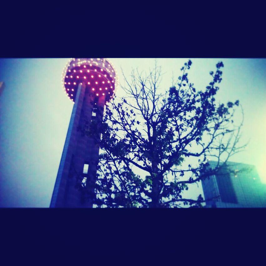 Gotta love it Dallas Landscape