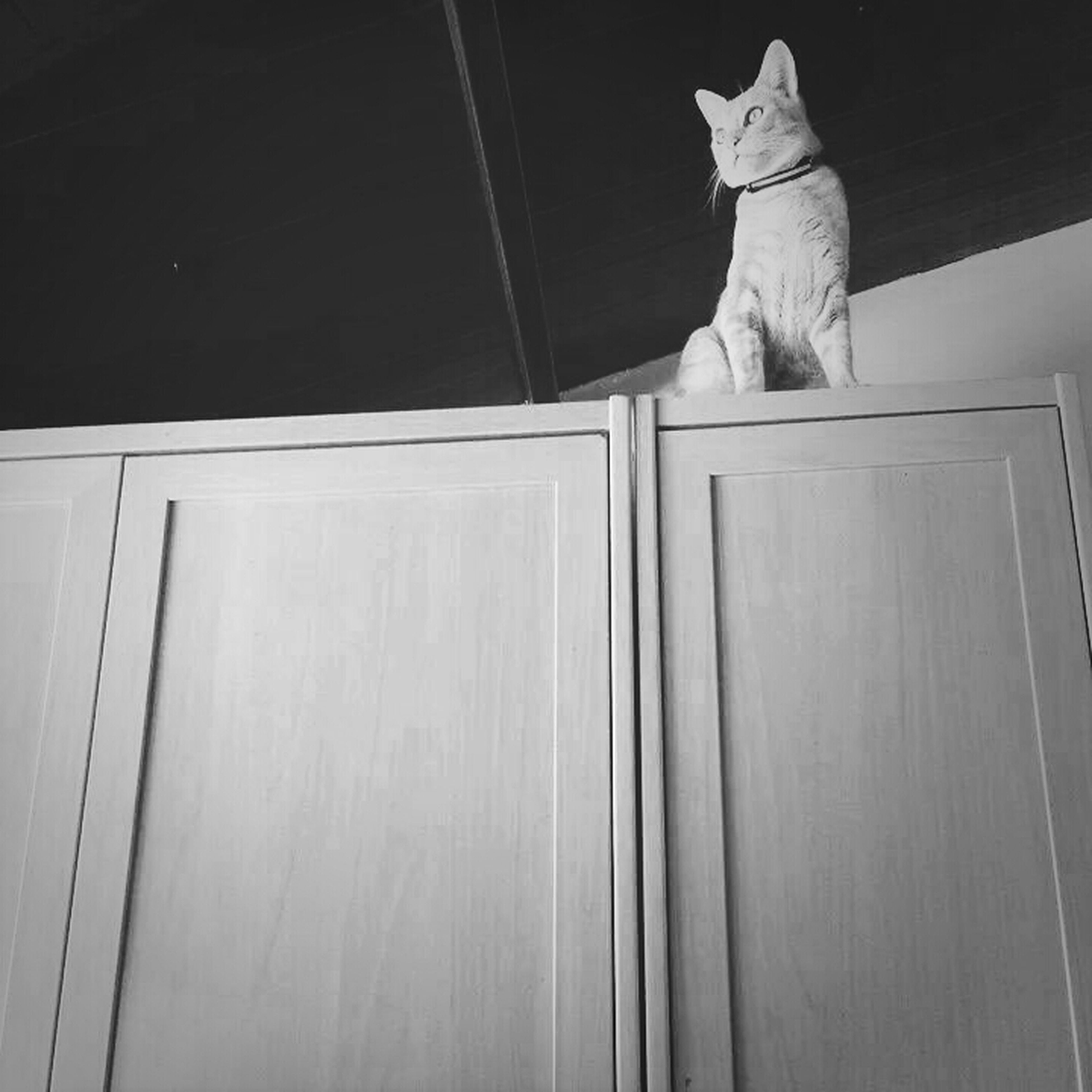 indoors, animal themes, one animal, cat, domestic cat, built structure, wall - building feature, door, architecture, wood - material, domestic animals, wall, pets, no people, feline, low angle view, house, mammal, home interior, wooden