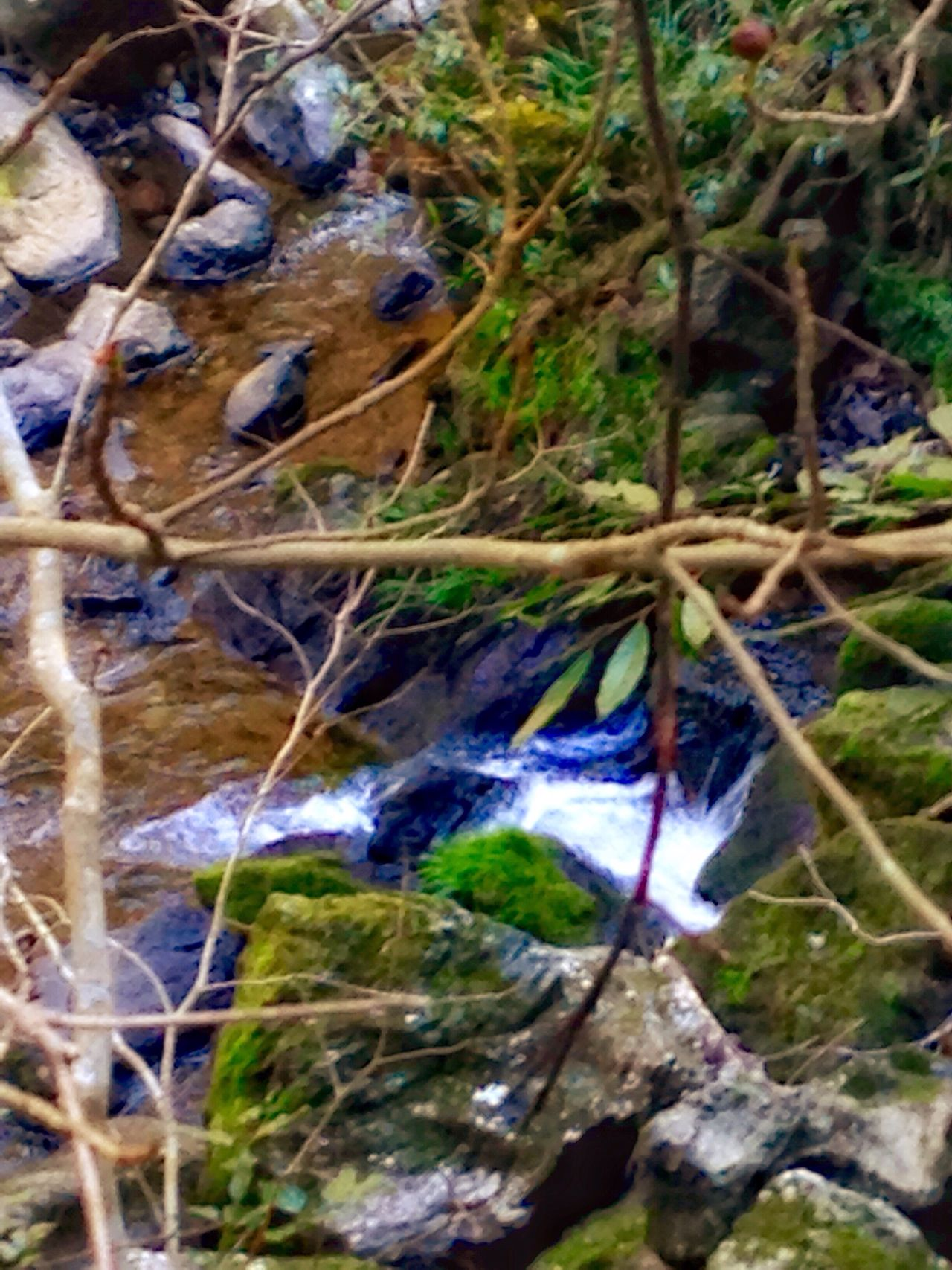 Creekside Trail Stream - Flowing Water Rapid Animal Themes Bird Nature Animals In The Wild One Animal Leaf No People Beauty In Nature Animal Wildlife Outdoors Day Close-up (null)EyeEm Japan EyeEm Best Shots Japan 🇯🇵 Japan