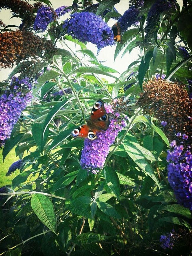 Butterfly :-)