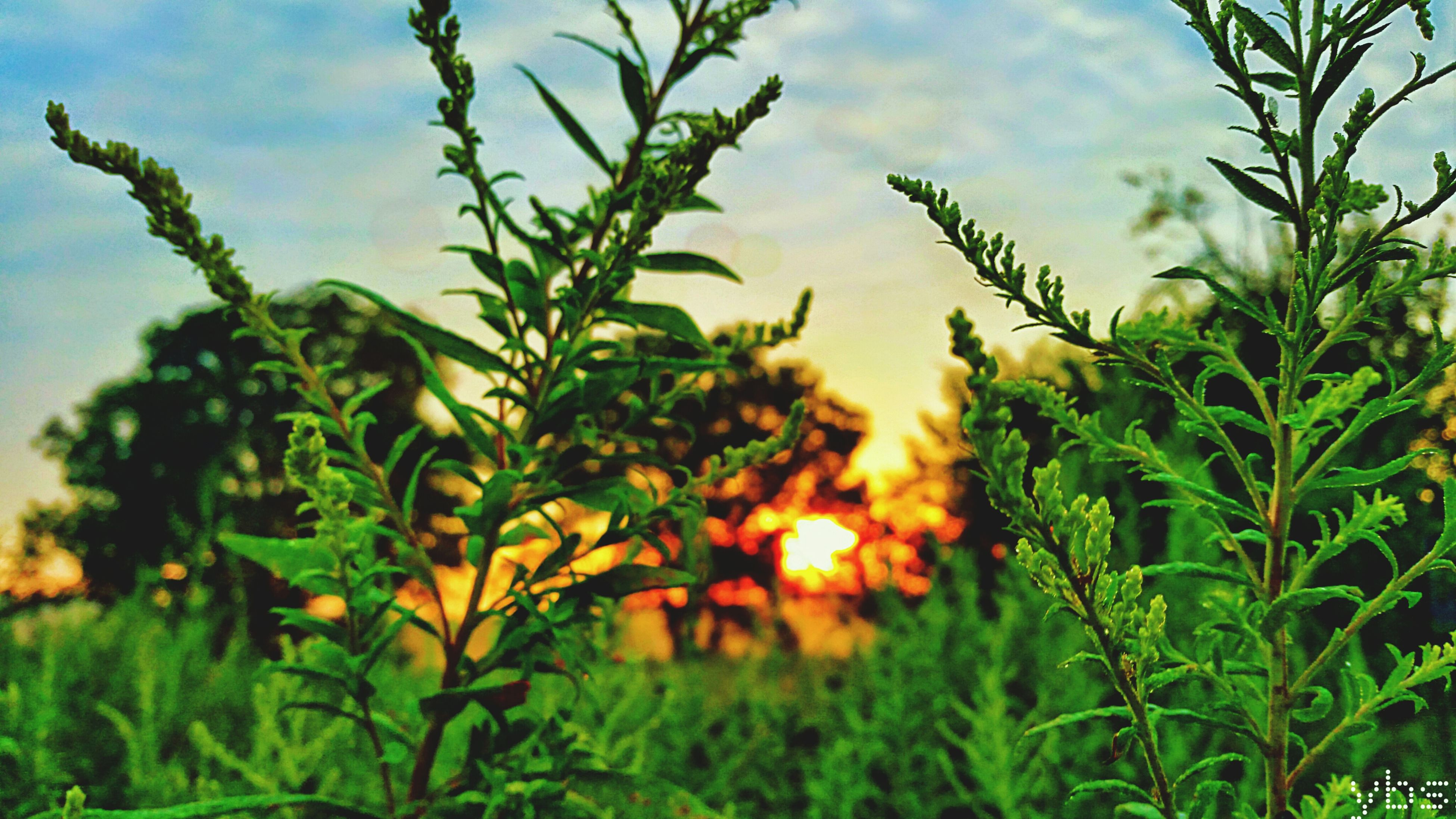 growth, plant, leaf, sunset, sun, sky, green color, nature, beauty in nature, sunlight, tranquility, tree, low angle view, focus on foreground, close-up, growing, outdoors, no people, sunbeam, freshness