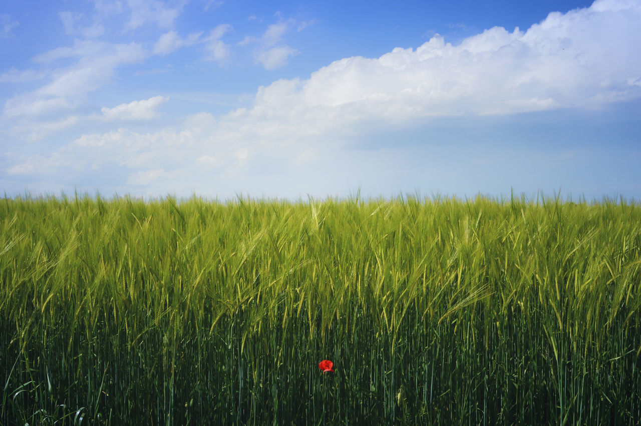 Beautiful stock photos of pflanzen, Agriculture, Beauty In Nature, Blue, Cloud - Sky