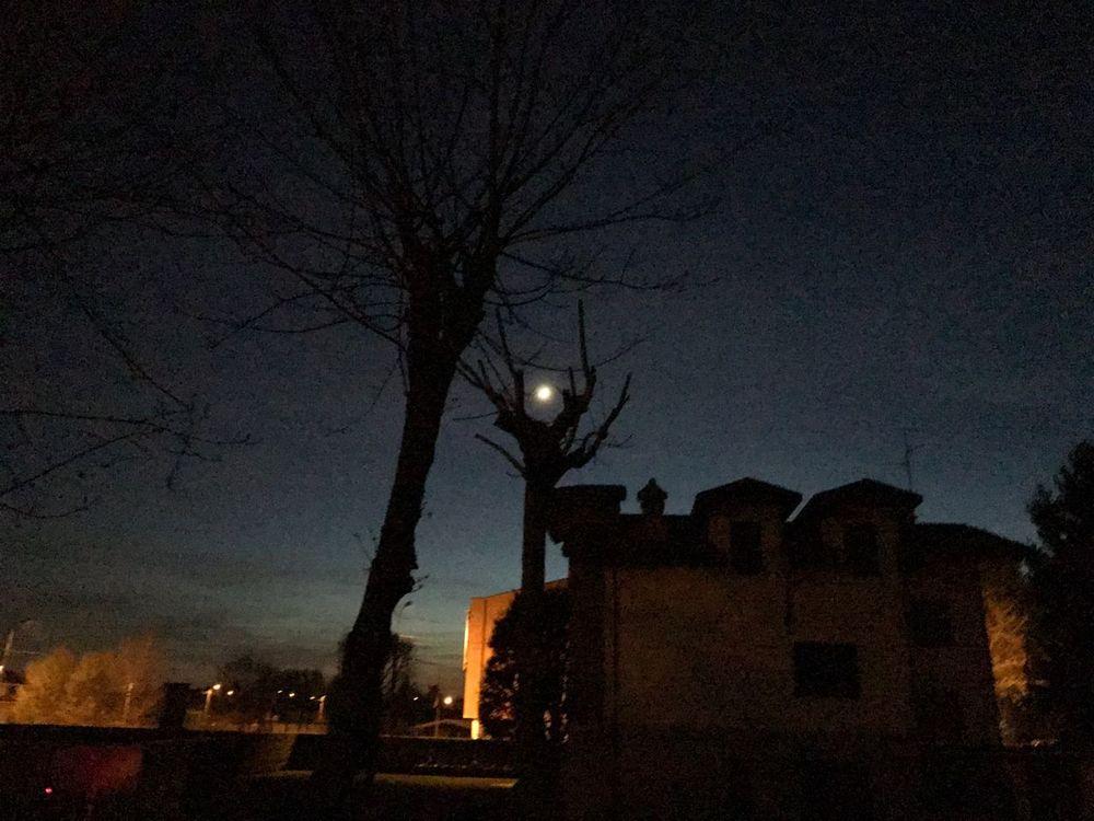 Night Moon Moonlight Bare Tree