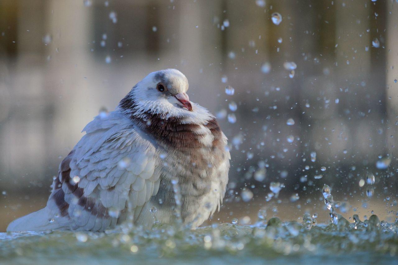 Beautiful stock photos of shower, Animal Themes, Bird, Day, Nature